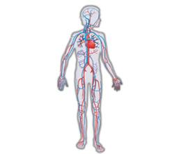 Причины и симптомы плохой циркуляции крови